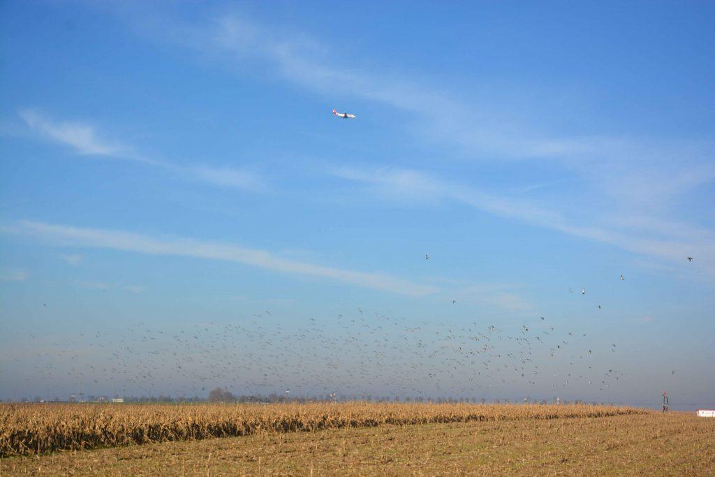 Volée d'oiseaux en plein champs